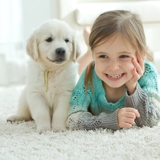 mohawk carpet pet